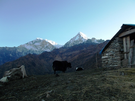 Khopra, Less-traveled Trail in Annapurna Region
